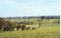 Tea Plantations_3